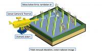 Ratu Tani, solusi penanganan hama pertanian bebas bahan kimia