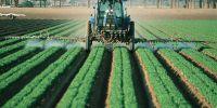 Bahaya pestisida dan cara menghilangkan sisanya dari buah & sayur