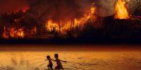 17 Cara mencegah kebakaran hutan dan lahan