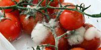 Duh! Viral saus tomat palsu rasa kaki dan bahan kimia berbahaya