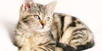 5 Tips pet photography menggunakan kamera smartphone