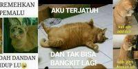 14 Meme kucing jika bisa bicara layaknya manusia, kocak abis
