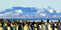14 Fakta menakjubkan penguin, hewan akuatik yang menggemaskan