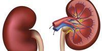 Kenali 5 gejala penyakit ginjal yang perlu diwaspadai sejak dini