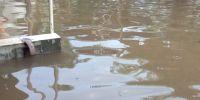 Rumput vetiver, salah satu tanaman pencegah longsor dan banjir