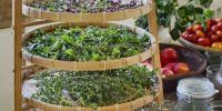 Perhatikan 6 anjuran ini saat membuat dan meminum ramuan herbal