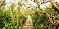 Pulau Kembang, destinasi seru bermain dengan kawanan kera