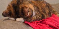14 Ekspresi malu-malu kucing dan anjing ini dijamin bikin gemas