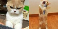 15 Tingkah ajaib kucing ini bikin senyum sendiri, lucu dan gemesin