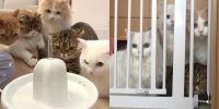 Kenalan dengan 7 kucing Cream Heroes yang super gemas