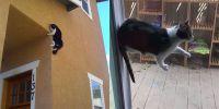 10 Potret kucing bak punya kekuatan super ini bikin ketawa bingung