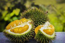 Apakah durian bisa menyebabkan asam urat? Begini penjelasannya