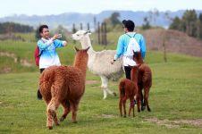 Mengunjungi Selandia Baru, negara indah nan memesona mata