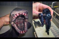 10 Foto 'monster' laut hasil tangkapan nelayan ini bikin merinding
