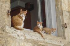 Bagaimana cara kerja feromon pada kucing? Ini penjelasannya