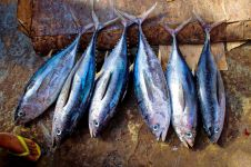 8 Khasiat ikan tongkol, salah satunya bagus buat diet