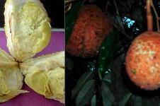 Si Gundul, durian tanpa duri asli NTB yang bikin penasaran