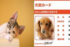 Nggak cuma manusia, kucing dan anjing di Jepang juga punya KTP