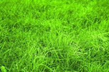 Manfaatkan bahan di dapur untuk membasmi rumput liar, mudah & efektif