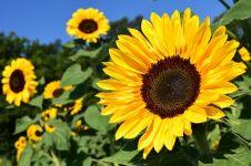 9 Jenis bunga cantik ini mudah ditanam di halaman rumah