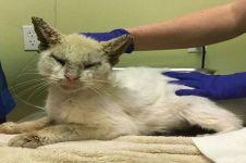 Awalnya dikira buta, ternyata kucing ini punya mata yang sangat indah