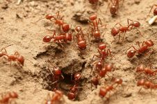 Kesal banyak semut di rumah? Ini 5 bahan ampuh untuk mengusirnya
