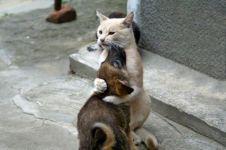 19 Potret persahabatan anjing dan kucing ini bikin hati adem