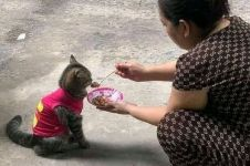 Diperlakukan bak anak sendiri, 7 potret kucing ini bikin geleng kepala