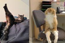 8 Tingkah kocak kucing ini bisa bikin mood naik, ada yang atraksi