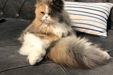 16 Ekspresi kucing saat capek ini dijamin bikin gemas