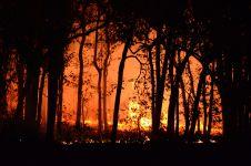 6 Perintah presiden terkait pencegahan kebakaran hutan dan lahan