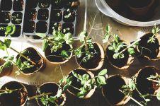 Manfaat berkebun dan merawat tanaman hias bagi kesehatan mental lansia