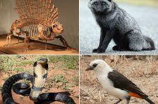 Mamalia, puncak evolusi vertebrata