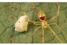 5 Serangga ini punya rupa aneh dan unik, lucu sih tapi berbahaya