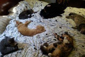 Bukannya kesal, 10 ulah kucing acak-acak rumah ini justru bikin gemas