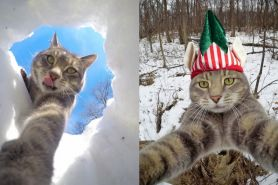 7 Potret Manny The Cat, kucing menggemaskan yang hobi selfie