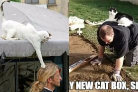 8 Potret kocak kucing saat iseng, nyebelin tapi bikin gemas