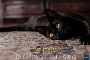 Inilah kucing terkaya di dunia, hartanya miliaran rupiah