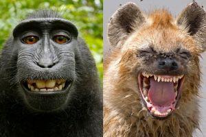 7 Potret hewan bak lagi ketawa ini bikin ikut geli sendiri