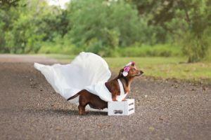 7 Potret kehamilan anjing yang menggemaskan, idenya keren!