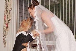 Wanita ini menikahi anjing dengan alasan yang konyol