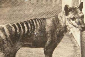 5 Hewan unik ini telah punah dari habitatnya, sayang sekali!