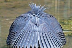 6 Burung paling unik di dunia, warna bulunya indah banget