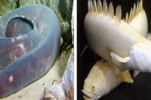 9 Ikan purba ini masih hidup hingga sekarang, bentuknya aneh-aneh