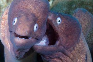 8 Potret perilaku aneh makhluk hidup bawah laut ini bikin takjub