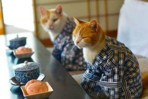 Kucing jadi hewan peliharaan terfavorit di Jepang, ini lho alasannya