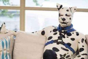 Pria ini memilih bergaya bak anjing, alasannya bikin syok