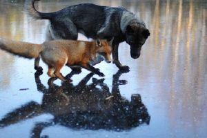 7 Kisah persahabatan hewan ini tak biasa, mengagumkan