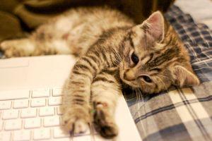 4 Sifat yang hanya dimiliki seorang pencinta kucing, kamu punya?