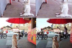 3 Tahun anjing duduk seperti manusia, alasannya bikin senyum sendiri
